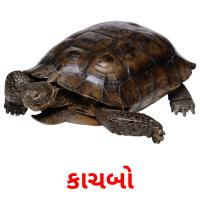 કાચબો picture flashcards
