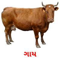 ગાય picture flashcards
