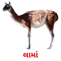 લામાં picture flashcards