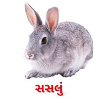 સસલું picture flashcards
