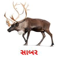સાબર picture flashcards