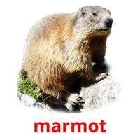 marmot picture flashcards