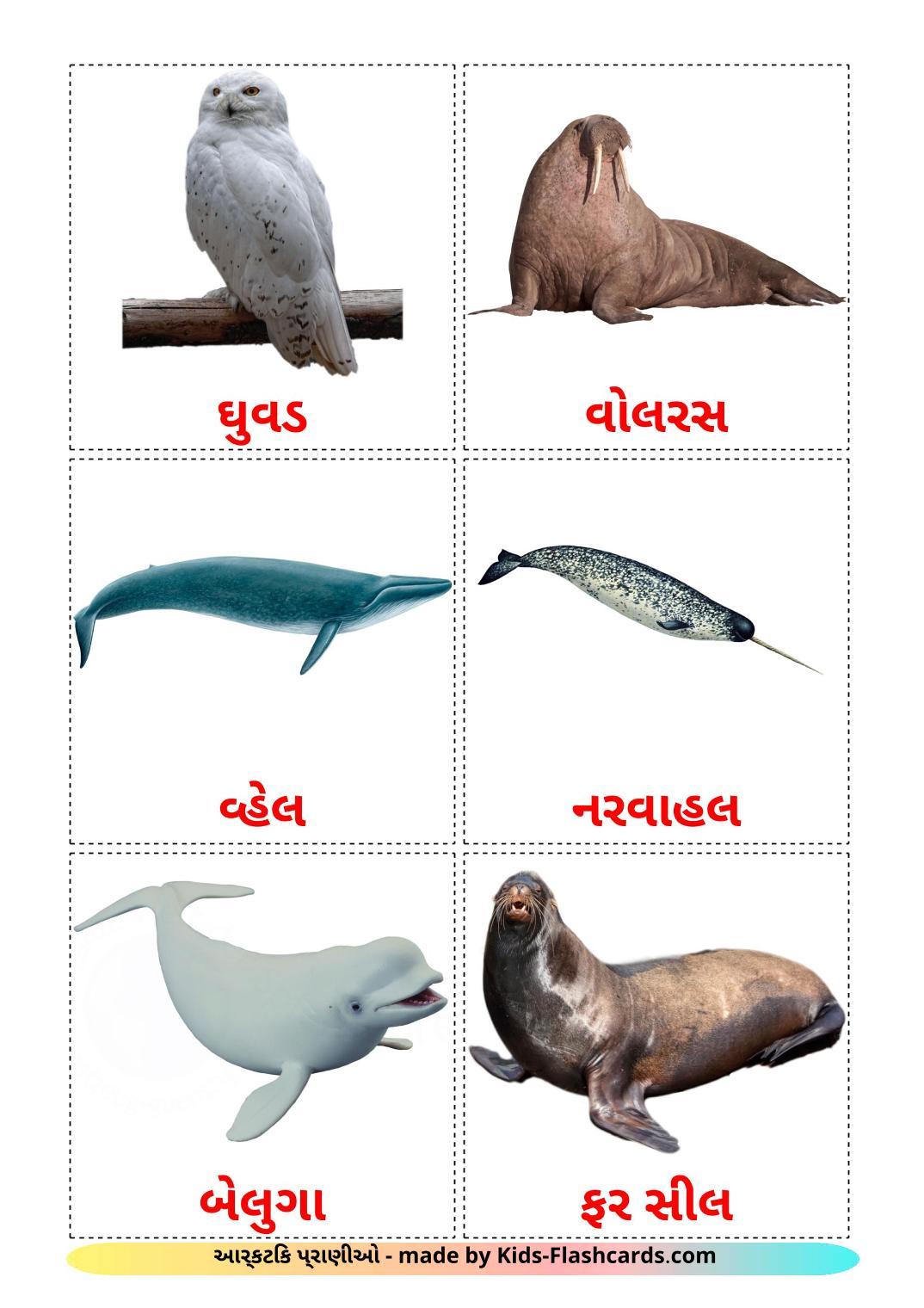 Arctic animals - 14 Free Printable gujarati Flashcards