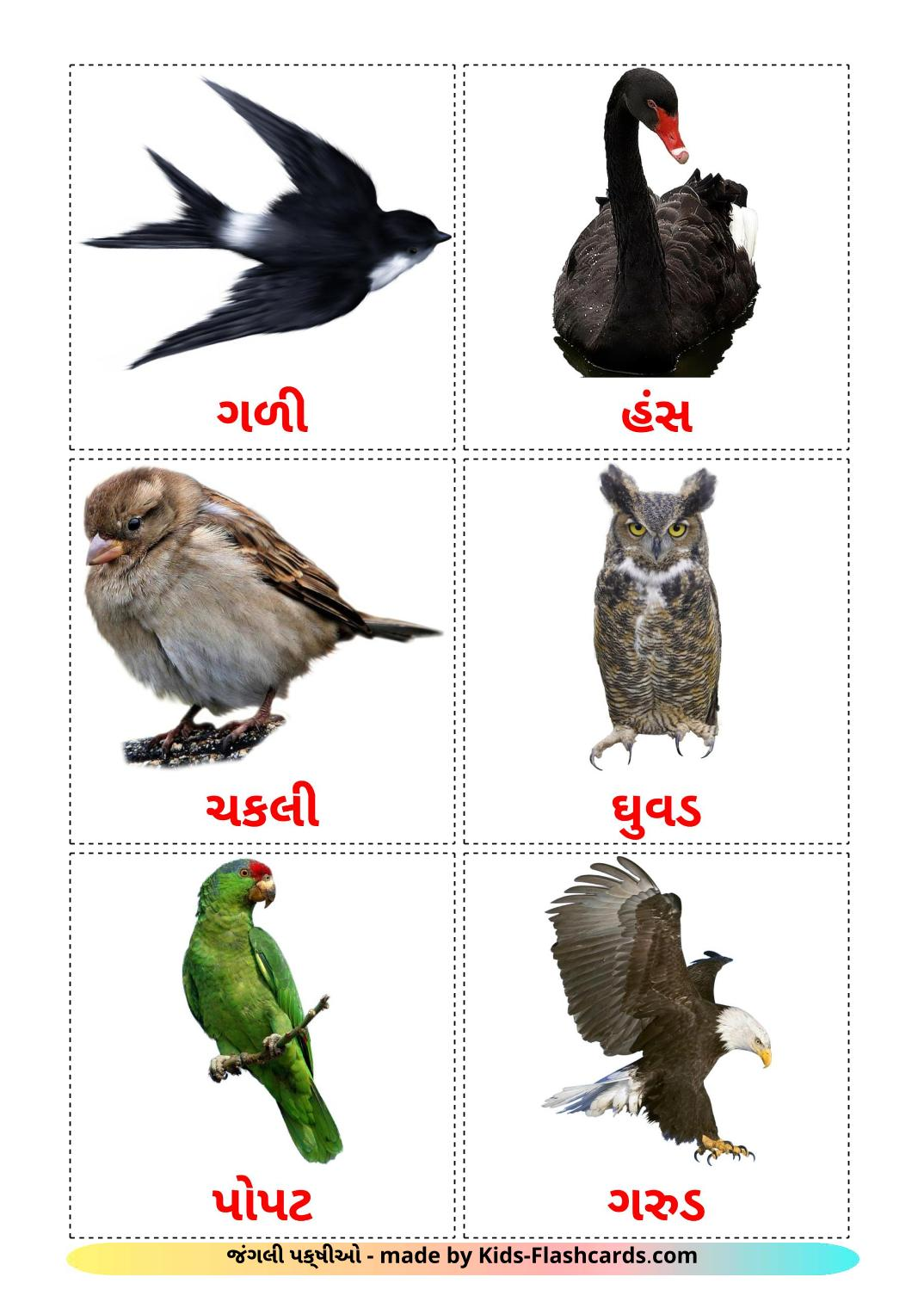 Wild birds - 18 Free Printable gujarati Flashcards
