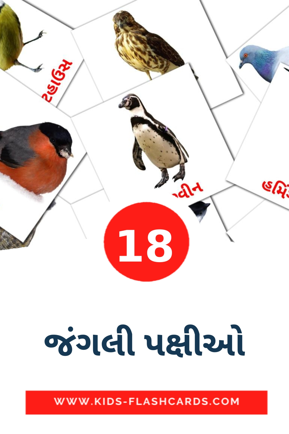 18 જંગલી પક્ષીઓ Picture Cards for Kindergarden in gujarati