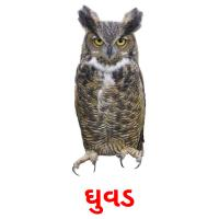 ઘુવડ picture flashcards