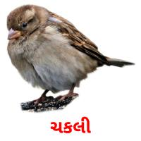 ચકલી picture flashcards