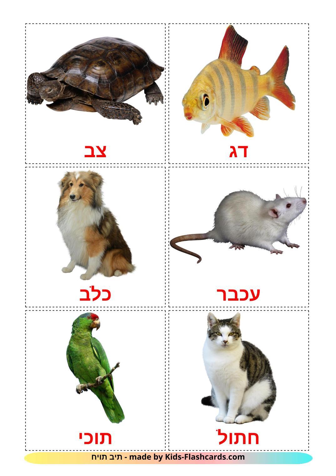 Domestic animals - 10 Free Printable hebrew Flashcards