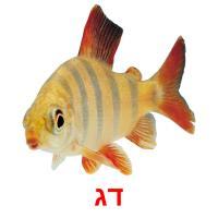 דג picture flashcards