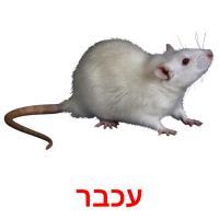 עכבר picture flashcards