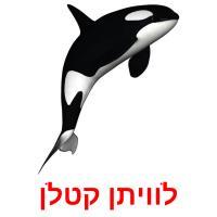 לוויתן קטלן picture flashcards