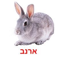 ארנב picture flashcards