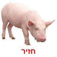 חזיר picture flashcards
