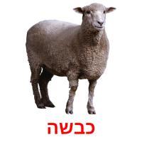 כבשה picture flashcards
