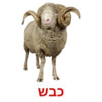 כבש picture flashcards