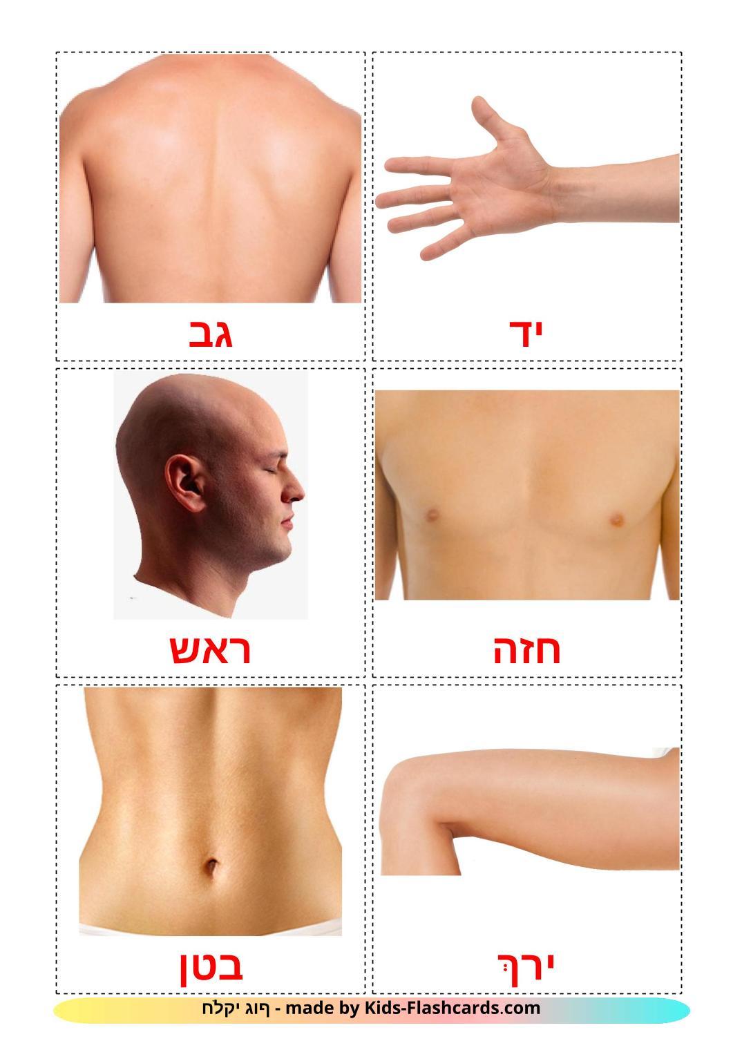 Body Parts - 26 Free Printable hebrew Flashcards