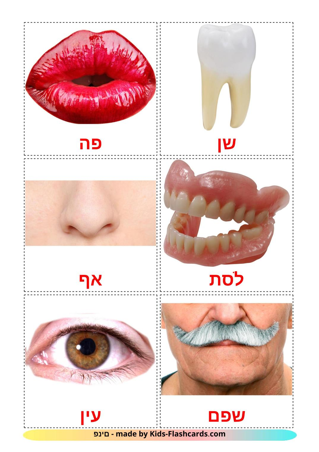 Face - 20 Free Printable hebrew Flashcards