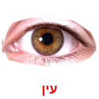 עין picture flashcards
