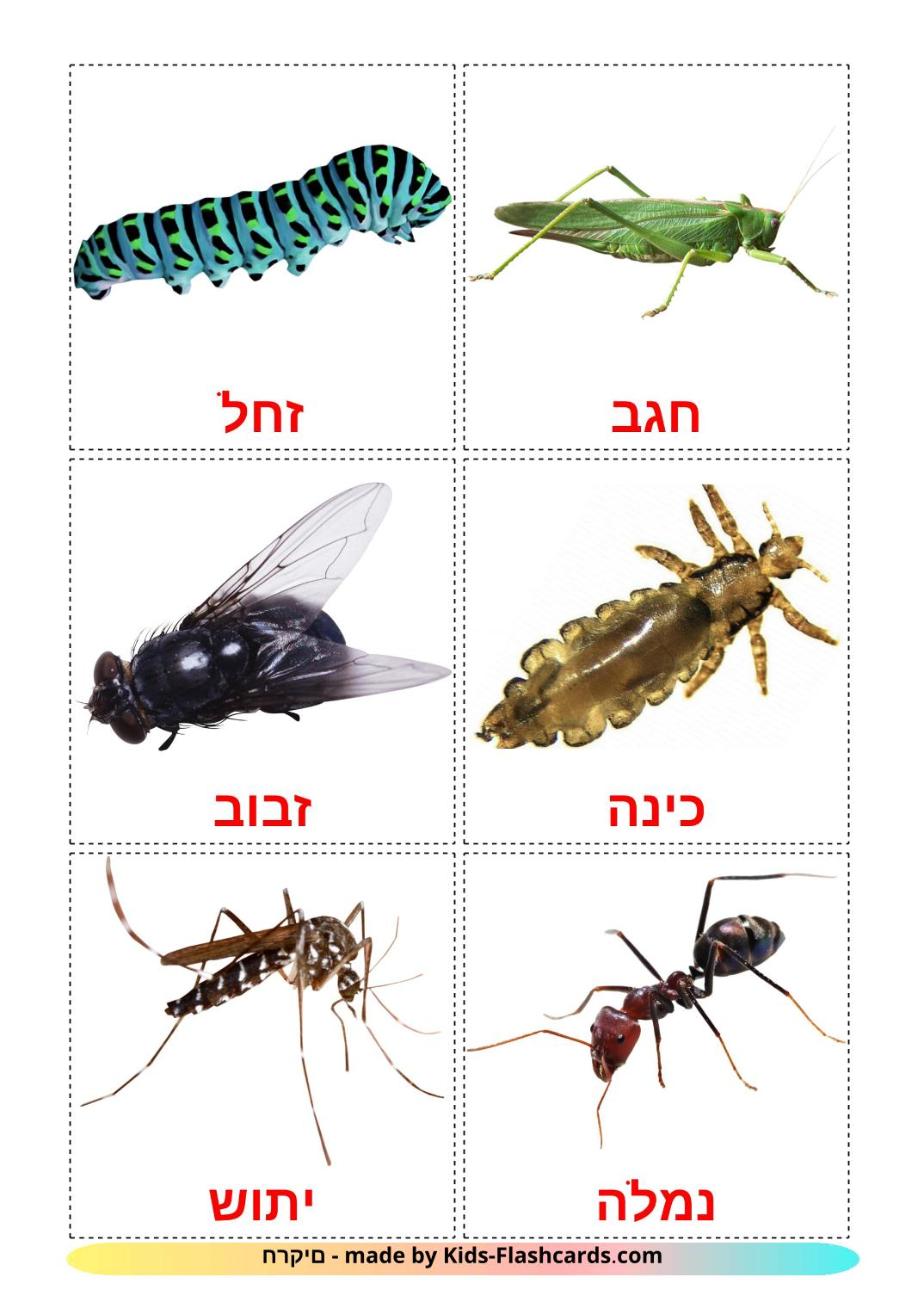 Insects - 23 Free Printable hebrew Flashcards