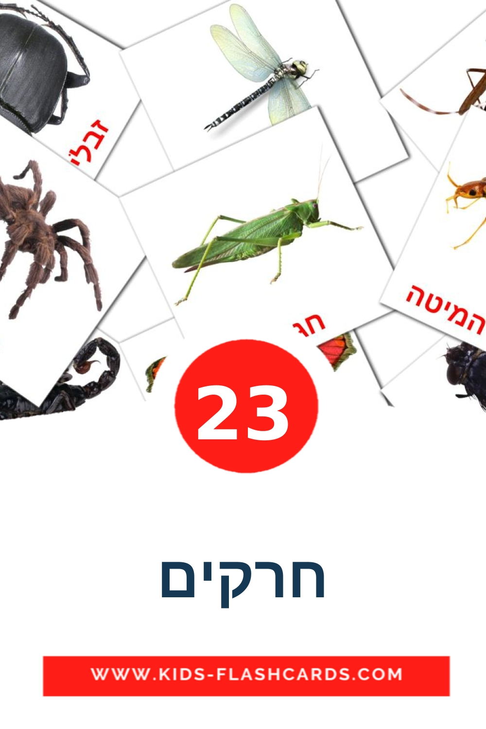 23 חרקים Picture Cards for Kindergarden in hebrew
