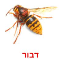 דבור picture flashcards