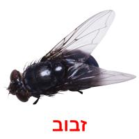 זבוב picture flashcards