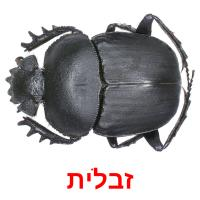 זבלית picture flashcards