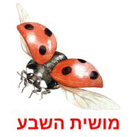 מושית השבע picture flashcards