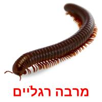 מרבה רגליים picture flashcards