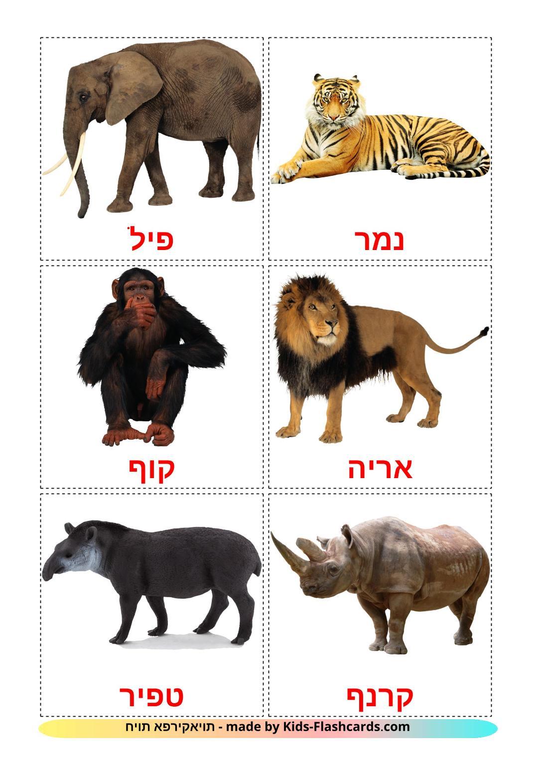Jungle animals - 21 Free Printable hebrew Flashcards