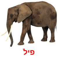 פיל picture flashcards