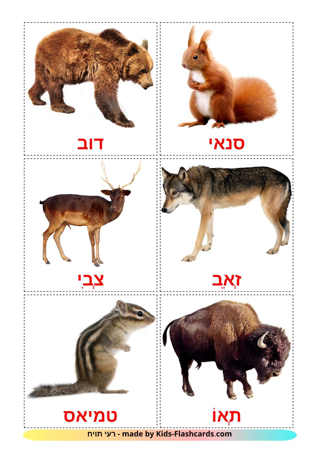 Forest animals - 22 Free Printable hebrew Flashcards