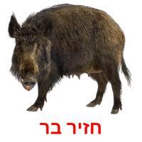 חזיר בר picture flashcards