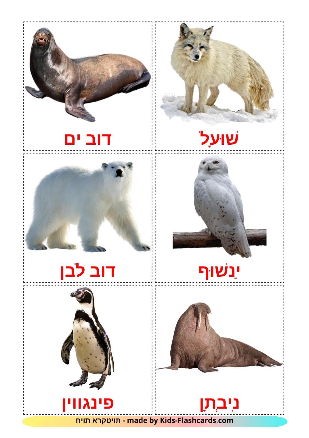 Arctic animals - 14 Free Printable hebrew Flashcards