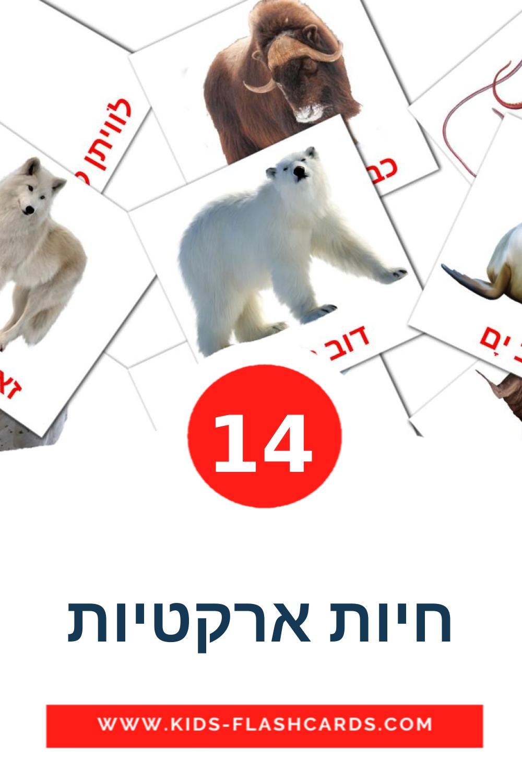 14 חיות ארקטיות Picture Cards for Kindergarden in hebrew