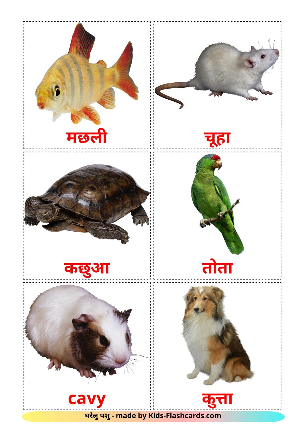Domestic animals - 10 Free Printable devanagari Flashcards