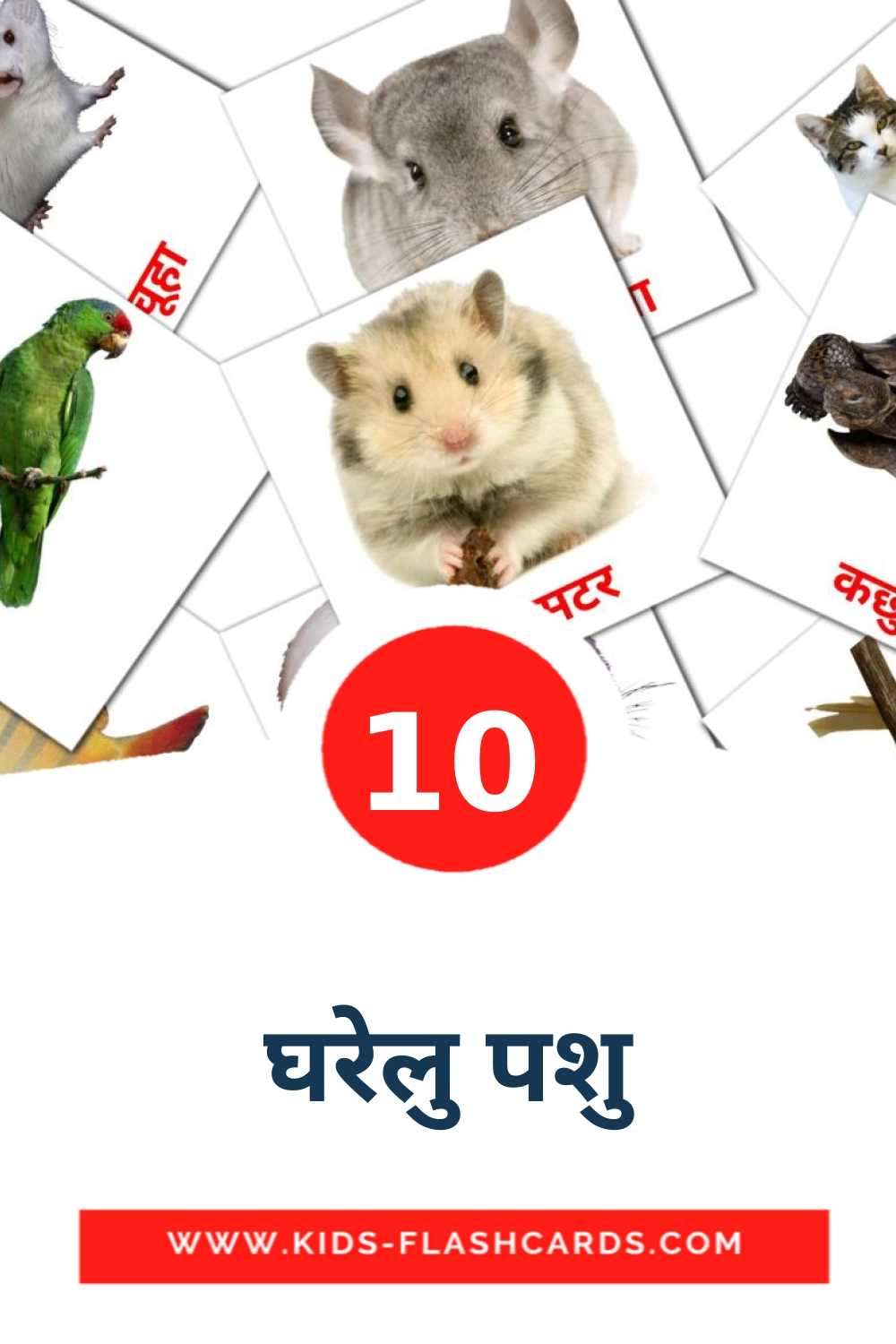 10 घरेलु पशु Picture Cards for Kindergarden in devanagari