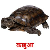 कछुआ picture flashcards