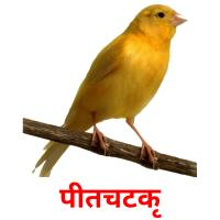 पीतचटकी picture flashcards