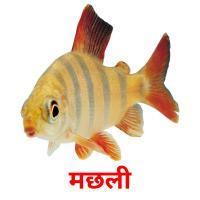 मछली picture flashcards