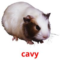 cavy picture flashcards