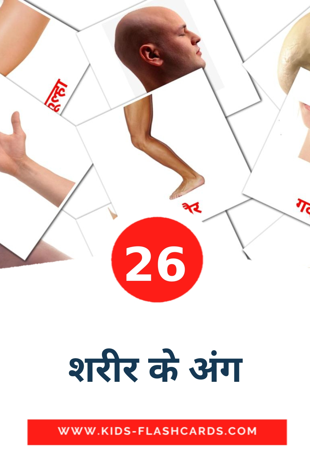 26 शरीर के अंग Picture Cards for Kindergarden in devanagari