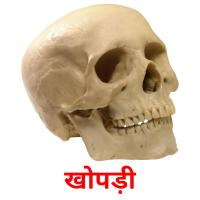 खोपड़ी picture flashcards