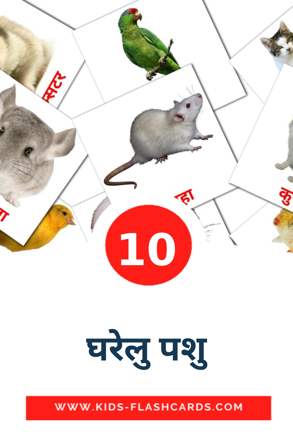 10 घरेलु पशु Picture Cards for Kindergarden in hindi
