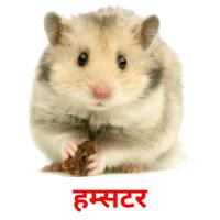हम्सटर picture flashcards