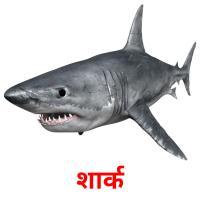शार्क карточки энциклопедических знаний