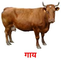 गाय picture flashcards