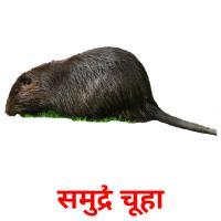 समुद्री चूहा picture flashcards