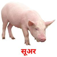 सूअर picture flashcards