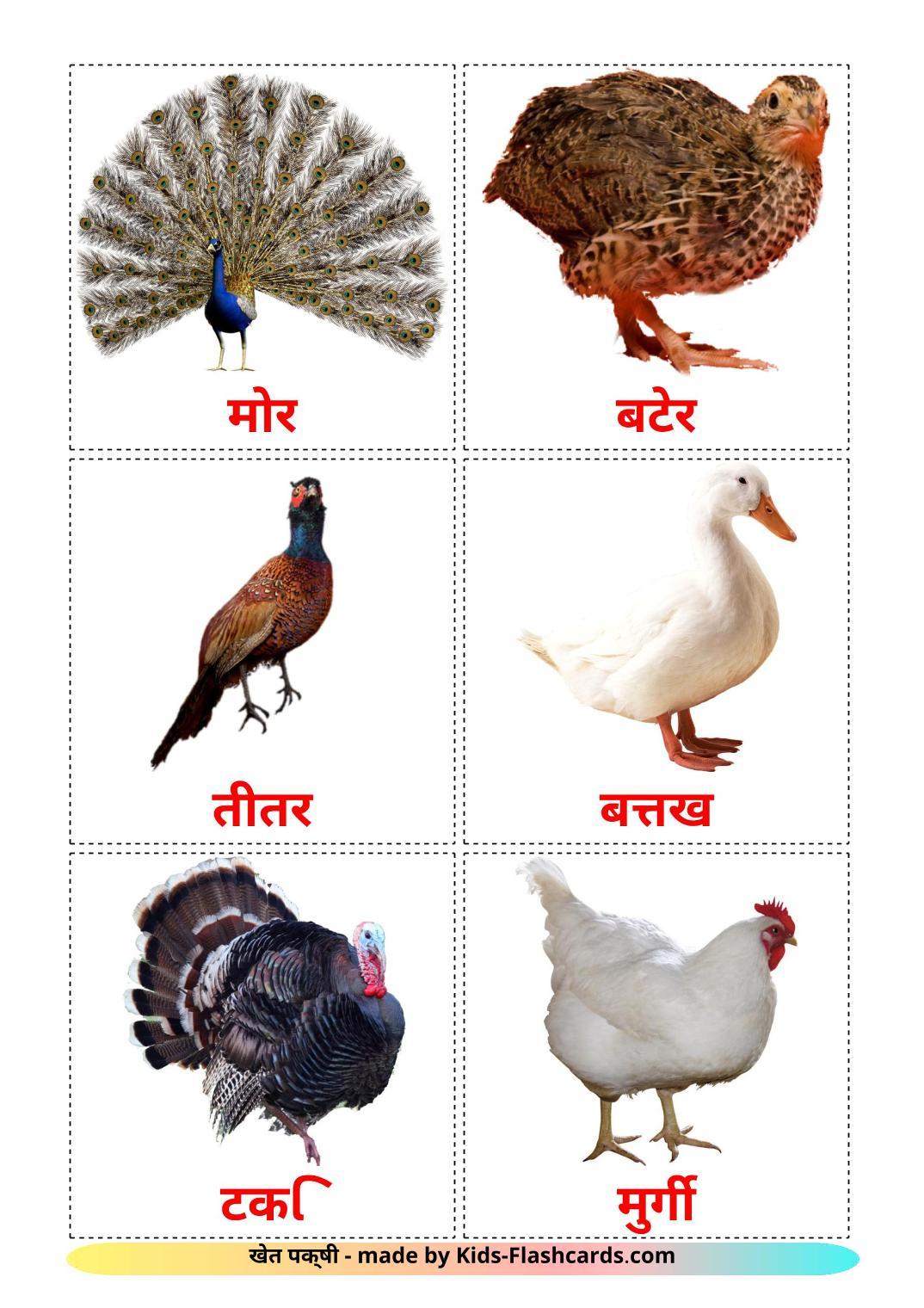 Farm birds - 11 Free Printable hindi Flashcards